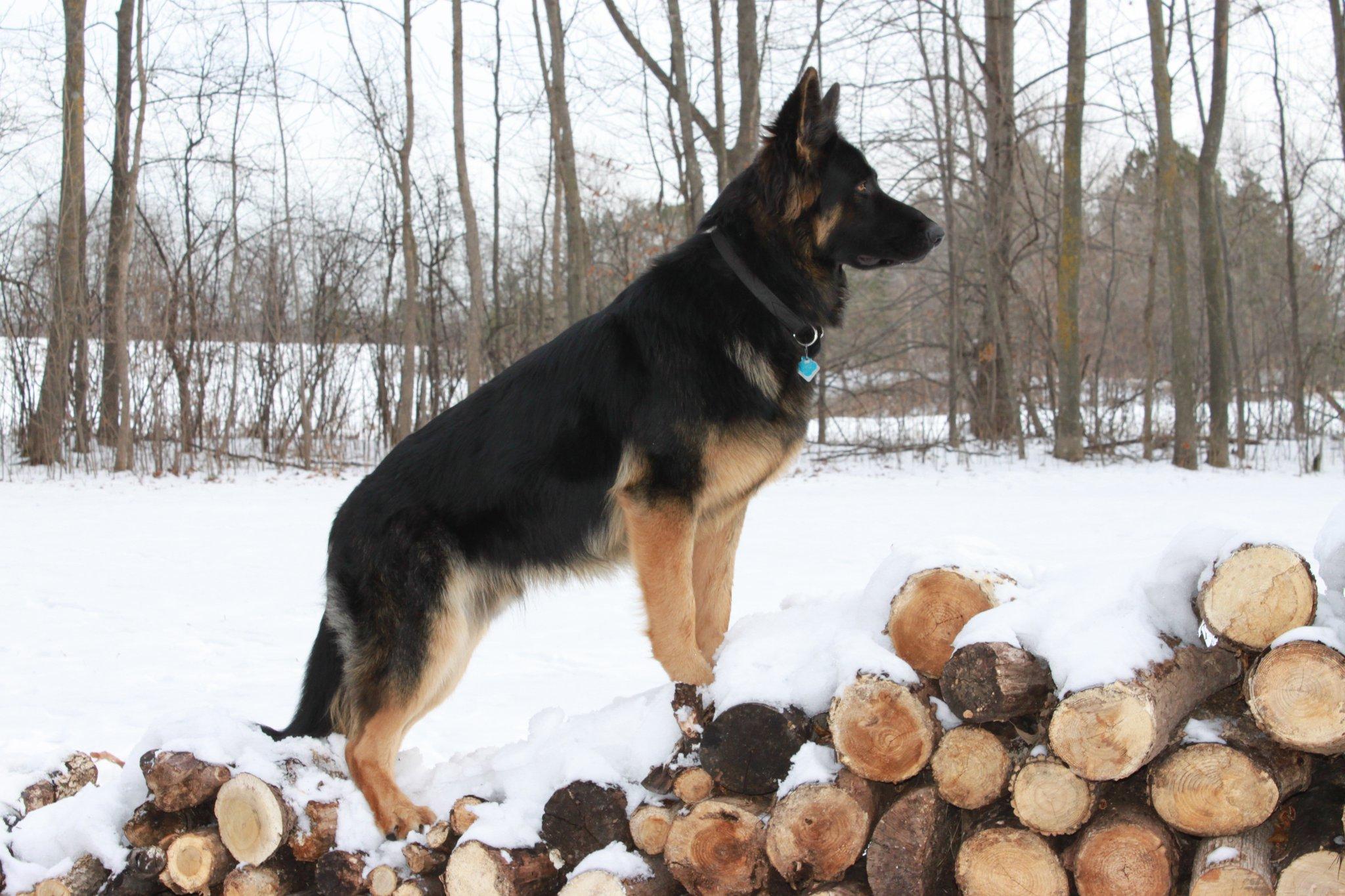 Axel On Wood Pile #1