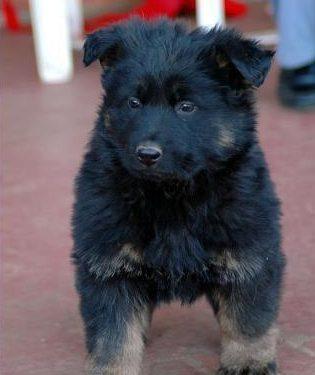 axels-pup