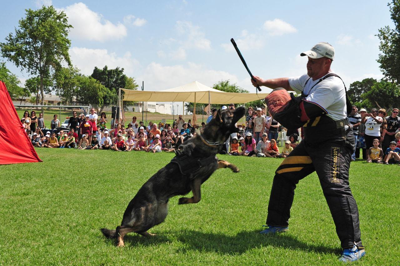 police-dog-attack-demonstration